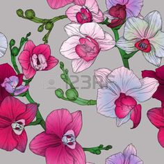 Tropical Flower Stock Illustrations, Cliparts And Royalty Free Tropical Flower Vectors