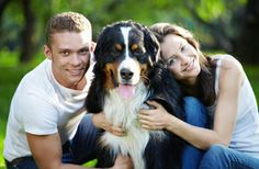 Here is a broad range of large #dog breeds and each has their own unique temperament and characteristics. Click here