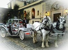 Cinderella Carriage with 2 white horses at Oheka Castle after the rain March 25 2017