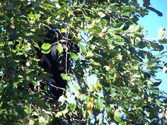 A little guy munching on apples! Motel, Apples, Wildlife, Guy, Fruit, The Fruit, Apple