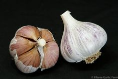 Pyong Vang garlic is an Asiatic variety that grows well in warmer climates and is a popular baking garlic due to its smooth, nutty flavor when baked in various dishes and recipes. Garlic Farm, Planting Garlic, Garlic Seeds, Purple Blush, Growing Mushrooms, Organic Seeds, Stuffed Mushrooms, North Korea, Vegetables