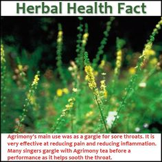 Agrimony Health Benefits and Uses