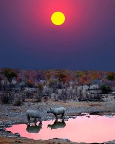 Sunset with Rhinos - Etosha National Park, Namibia, Africa African photo Chobe National Park, Parc National, National Parks, Beautiful Sunset, Beautiful World, Beautiful Places, Beautiful Pictures, Places Around The World, Around The Worlds