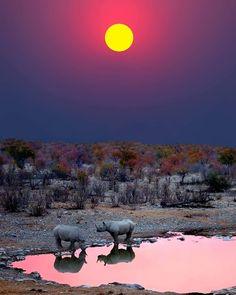 Sunset with Rhinos - Etosha National Park, Namibia, Africa African photo Beautiful Sunset, Beautiful World, Animals Beautiful, Beautiful Places, Beautiful Pictures, Chobe National Park, Parc National, National Parks, Places Around The World
