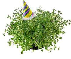 PARTY THYME!!!!!!!! Haha... Yes, I laughed