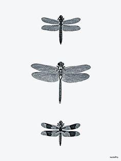Vanilla Fly Dragon Fly Poster