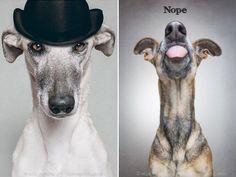 Funny Dog Portraits By Elke Vogelsang  – 20 Pics