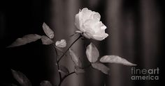 Floral Black White by Andrea Anderegg #floral #decor #prints #fineart
