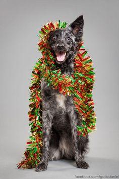 """Siempre decimos que """"el perro, es el mejor amigo del hombre"""" y porque no, también un buen amigo de la navidad. En estas imágenes, poder ver una boni..."""
