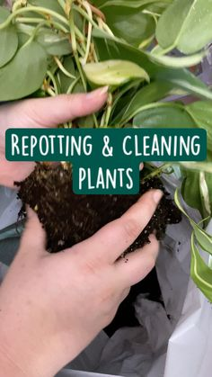 Hanging Plants, Potted Plants, Garden Plants, House Plants, Garden Yard Ideas, Lawn And Garden, Garden Bed, Box Garden, Garden Care
