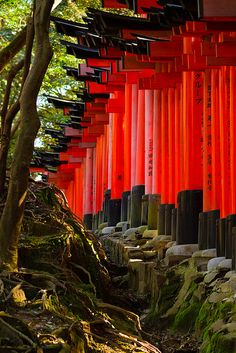 Fushimi Inari, Kyoto, Japan  This place is so amazing. One of my favourite in the world !