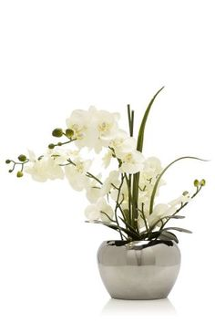 Contemporary White Phalaenopsis Orchids In Round Silver Pot