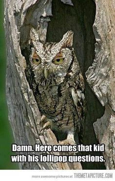 "Owl, how many lick does it take to get to the center of a Tootsie Pop?"" ""Let's see, *crunch*."" ""How many licks does it take to get the the center of a Tootsie Pop?Is it bad that I can quote the whole commercial? Funny Quotes, Funny Memes, Pet Memes, Jokes Quotes, Thing 1, Humor Grafico, Haha Funny, Funny Stuff, Funny Things"