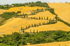 de cipressen in Toscane, vooral tussen La Foce en Radicofani