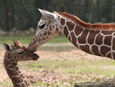 Warning: cuteness overload  Pictures of all of the latest newborn zoo animals, organized by species or zoo.