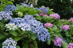15 Plants That Bloom All Summer Long Perennial Garden Plans, Flower Garden Plans, Garden Yard Ideas, Garden Projects, Fence Garden, Cat Garden, Garden Fun, Patio Ideas, Container Flowers