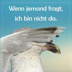 Wenn jemand fragt, ich bin nicht da If I do not see, no one sees me either Sea nothing not hear # not speak Haha, Home Logo, Where The Heart Is, Holidays And Events, Funny, Animals, Comic, Trends, Memes