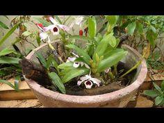 Horta, frutas e flores no jardim: Orquideas nos jardins