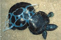 Either cut these, recycle them with your plastic bags, or both.