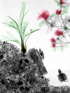 X-Ray Art – Un artiste colorise la nature aux rayons X (image)