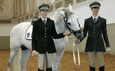 Riders can begin their training once they turn 16 and leave compulsory education. The Eleves are expected to start their career in the stables under the carefeul eye of the Stable Master and are only allowed to start their ride training when they have proved to be hardworking and have a good connection with the horses