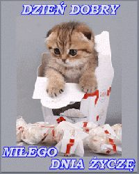 Good Night, Good Morning, Weekend Humor, Cute Pictures, Clip Art, Kitty, Memes, Cats, Funny