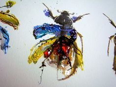 CITY BUG COLLECTION  ---Blepharopsis mendica---  Insectitudes - Planche 14    ***