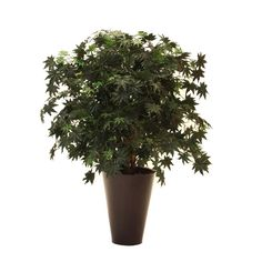 Vickerman TXX1840-0066 Japanese Maple in Metal Container Tree, 4', Green *** Details can be found by clicking on the image.