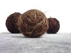 Agustina Woodgate  Human Hair, 120 ft. Hair rope each  2006
