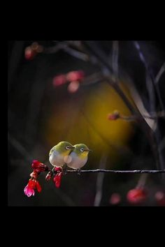 #birds @Brittany Horton Horton Mullins (Eating Bird Food) @Genevieve Roy Tan the SmallBiz Marketing Bird #animal #colorful_birds #lovebirds #beautifulbirds