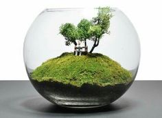 Bonsai Terrarium For Landscaping Miniature Inside The Jars 55