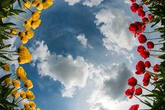 Partly Cloudy - Skagit Tulip Festival, Washington