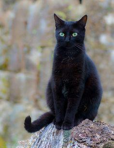 Catycat21     Black cat de GGL1