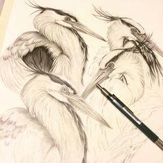 Egret cluster pencil on paper