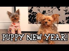 Puppy New Year!  New Year Resolutions