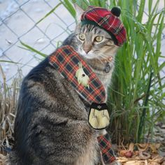 Friday's Foto Fun – Cats in Tartans | The Scottie Chronicles