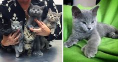 "Man Saves Kittens From Industrial Site and Surprised to See Some of Them With Giant ""Bear"" Paws..."