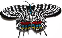 """Amazon.com: [Single Count] Custom and Unique (3 1/2"""" x 2 1/4"""" Inches) Garden Wild Life Bright Colorful Insects Butterfly Iron On Embroidered Applique Patch {White, Black, Red, Blue and Yellow Colors}"""
