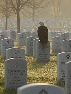 """The eagle couldn't have picked a better person."" Photo of eagle sitting on Minneapolis' Fort Snelling National Cemetery gravestone of Sgt. Maurice Ruch touches hearts, goes viral. *Click to read the whole, touching story..."