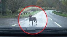 Vede cane in strada, si ferma: la reazione dell'animale è stupenda