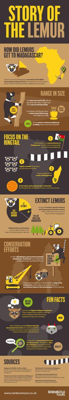 Story of the Lemur - Lemur Facts Infographics.