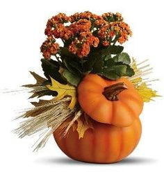 Ceramic Pumpkin &  Plant Capture the spirit of autumn with a bright hand-painted ceramic pumpkin showcasing a lovely, long-lasting kalanchoe plant. Accented with straw and maple leaves, it's a gift that makes fall even more fabulous. #WinfieldFlowers #Autumn #FallFlowers