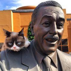Grumpy Cat visits Walt Disney Animation Studios, December 2015 #GrumpyCat #Tard #TardarSauce #Cat #Cats