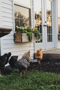 Country Farm, Country Life, Dream Garden, Home And Garden, Future Farms, Farms Living, Hobby Farms, Farm Gardens, Chickens Backyard