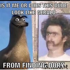 @thegeraldarmy  resemblance is uncanny!  #geraldthesealion #geraldfindingdory #findingdory #findinggerald #gerald