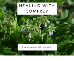 Comfrey is an amazing herb able to heal small cuts and large wounds quickly and safely. Learn the easiest ways to use this healing herb.