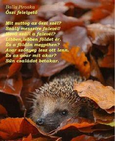 Baby Kids, Fall, Autumn, Fall Season