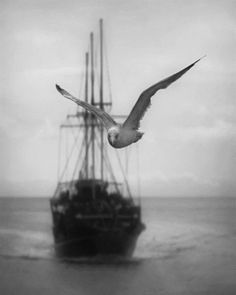birds | sea | seabird | sail boat | pirate ship | ocean | black & white | photography