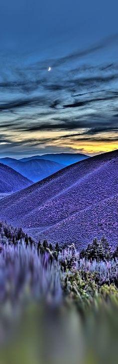 ♥ Purple Valley Idaho - GREENMIdotNET