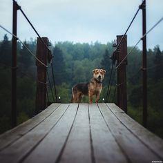 #animals, #dogs, #pictures, #животные, #собаки, #картинки https://avavatar.ru/image/6012